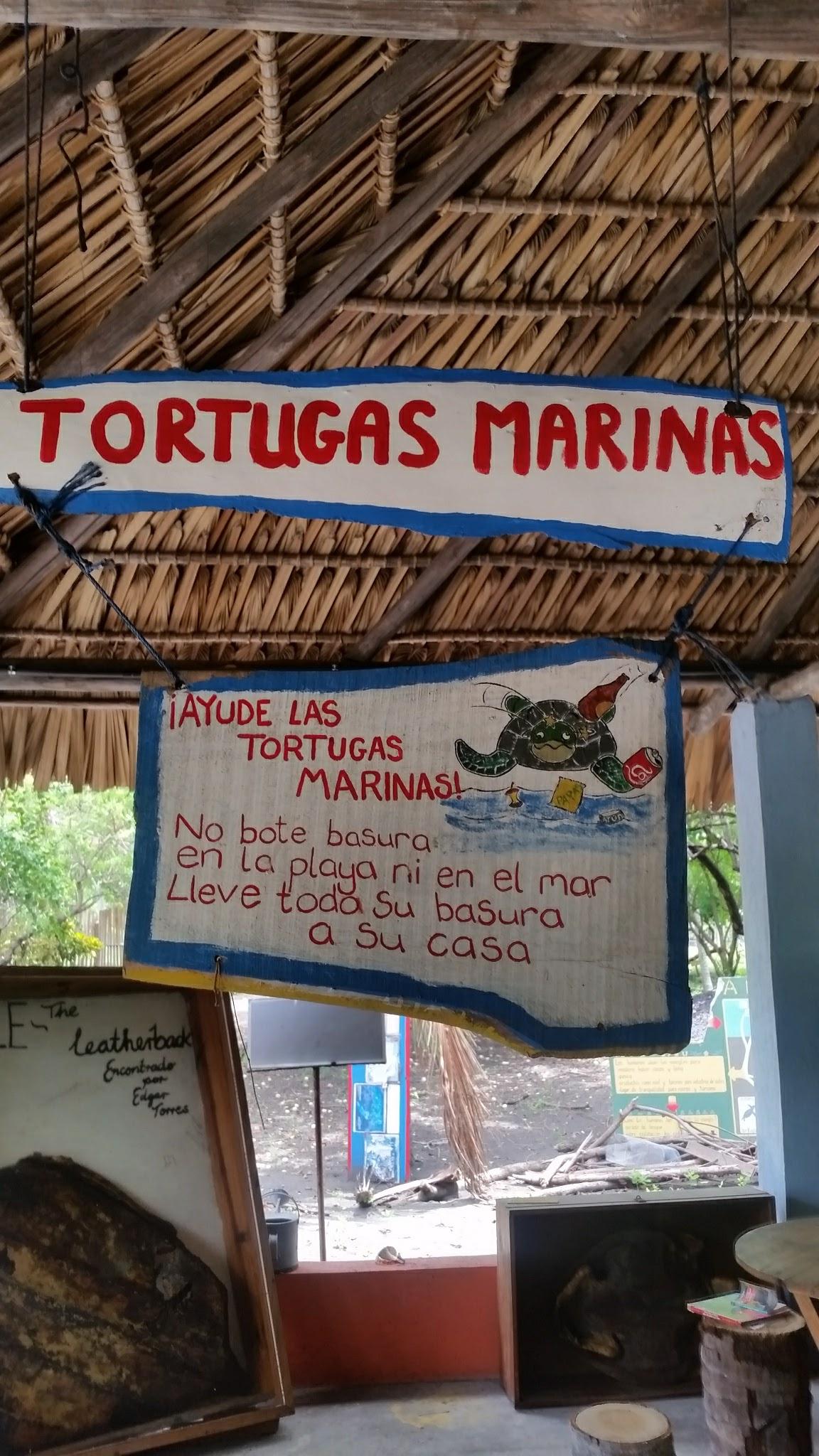 guatemala-monterrico-sea-turtle-conservation16