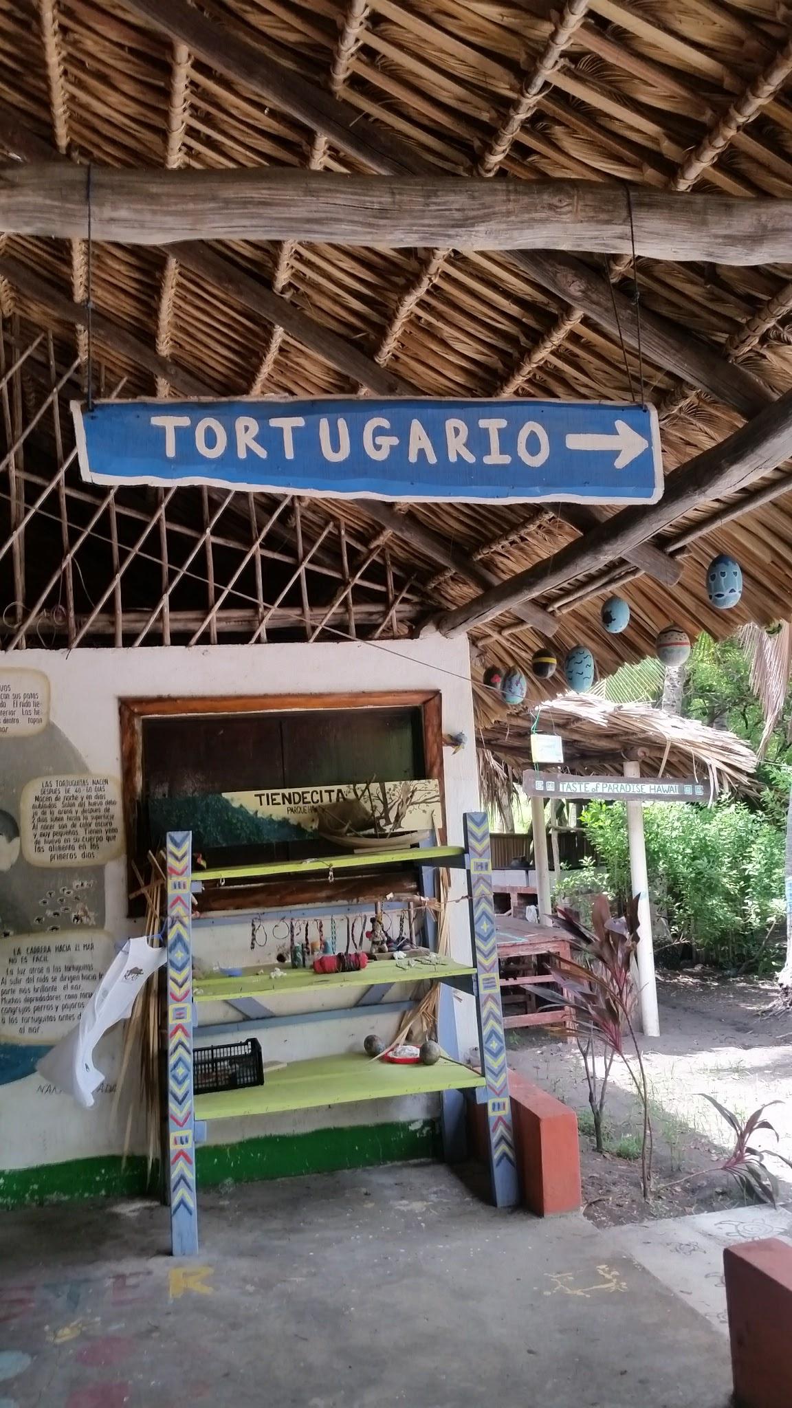 guatemala-monterrico-sea-turtle-conservation18