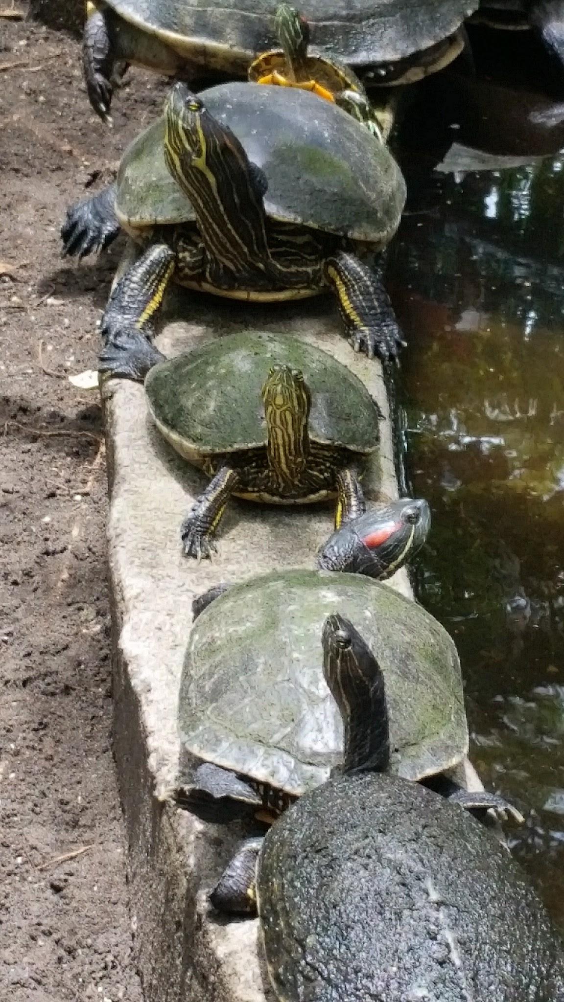 guatemala-monterrico-sea-turtle-conservation32