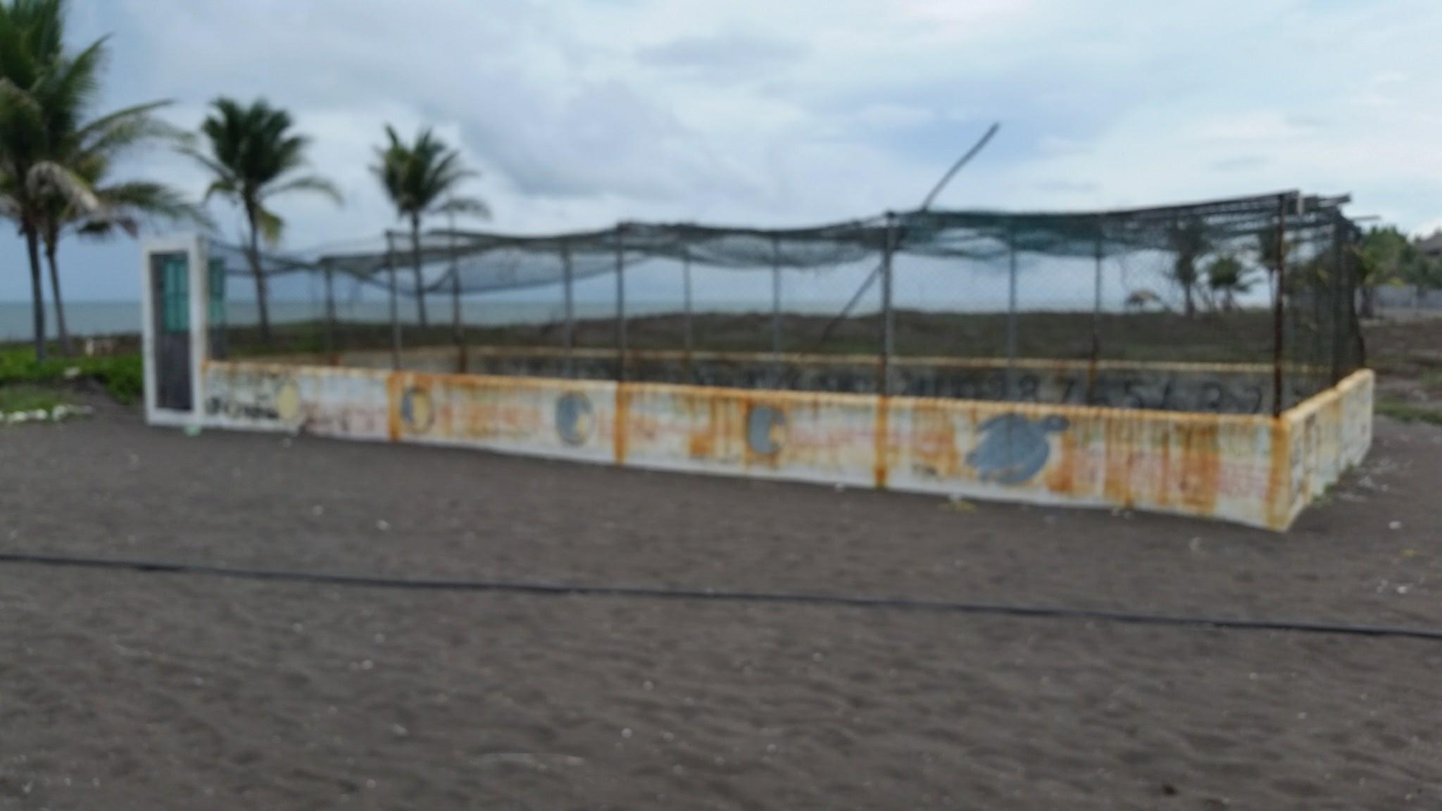 guatemala-monterrico-sea-turtle-conservation67