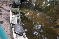 guatemala-monterrico-sea-turtle-conservation31