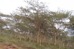 kenya_riftvalley_landscape_07