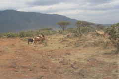 kenya_riftvalley_landscape_11