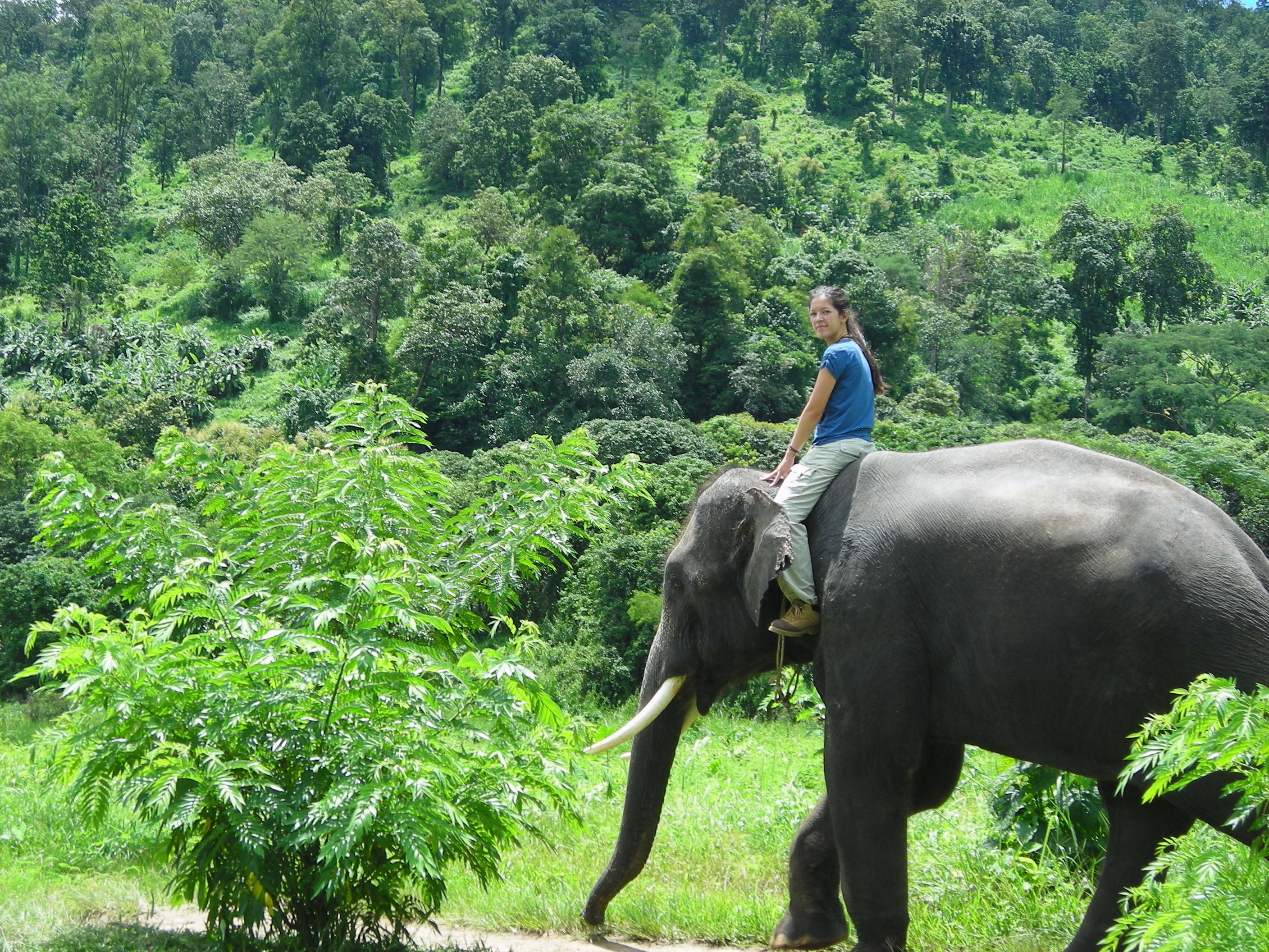 Thailand Elephant Camp Chiang Mai Volunteers Riding Village