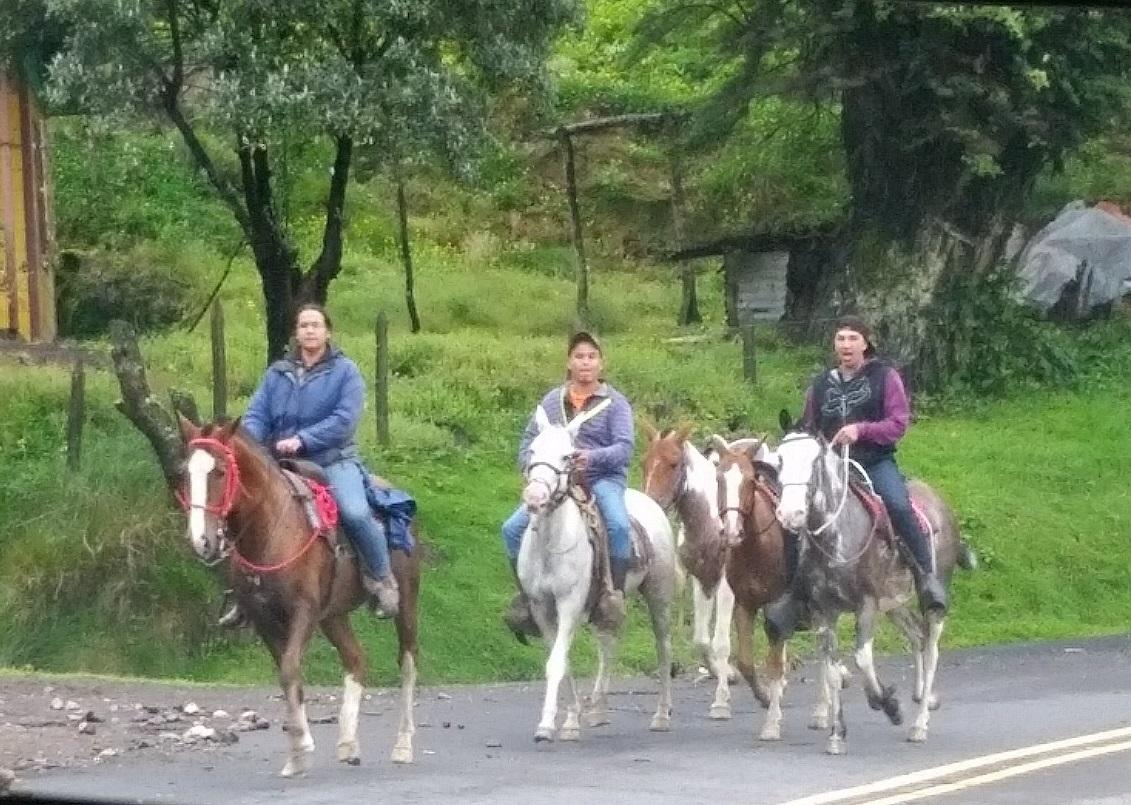 Irazu Volcano Horses