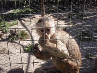 Wildlife Rescue Volunteering Ecuador
