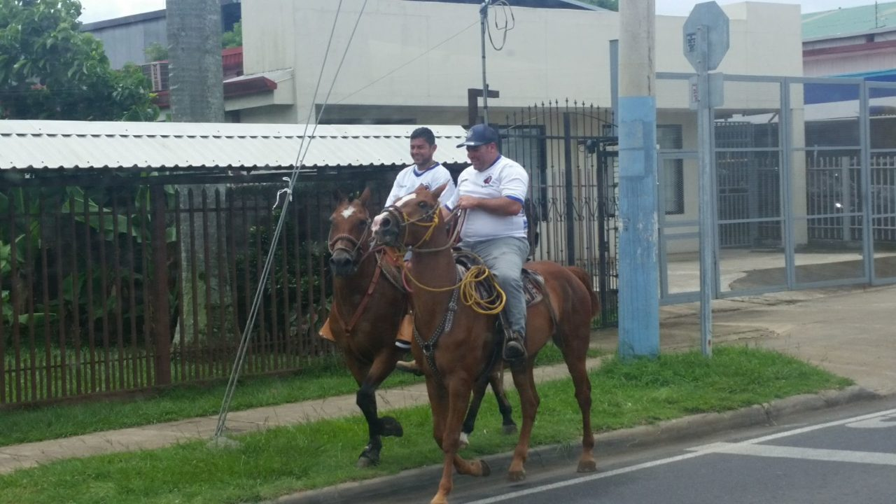 Horses in San Jose Costa Rica