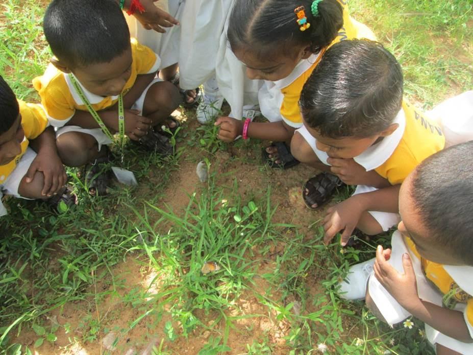 India Teaching Volunteer Looking at Butterflies