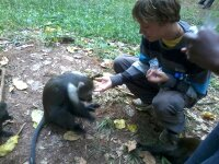 Kenya Medical Volunteer Ben Mcaskill Feeding Monkeys