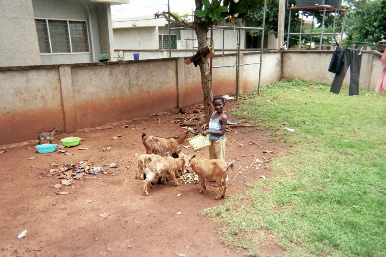 Lindsey Elliott Ghana Goats